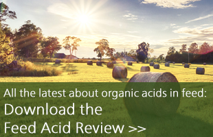 Download Feed Acid Review