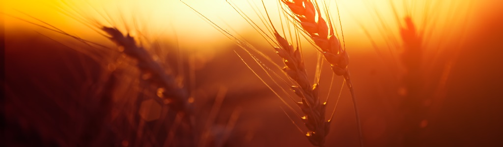 Grain preservation
