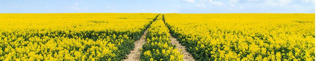 Perstorps biobränslen