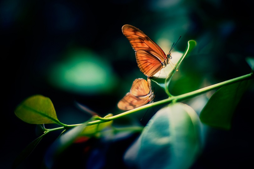 An orange butterfly on a branch with green leaves