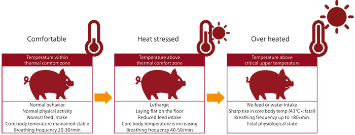 Heat stress in swine