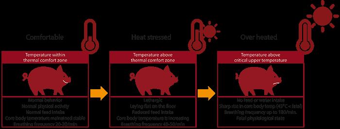 Heat stress in swine
