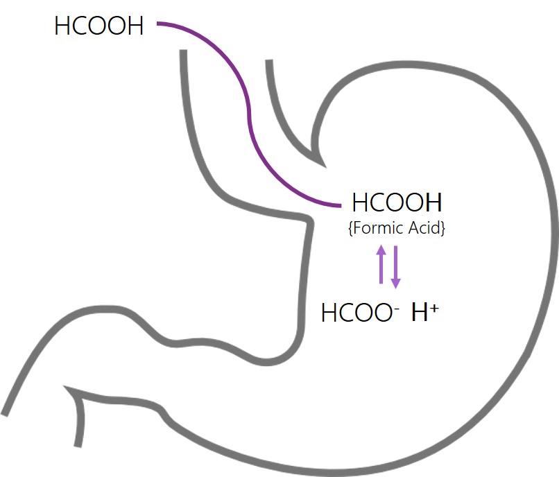 Gastric faith of formic acid