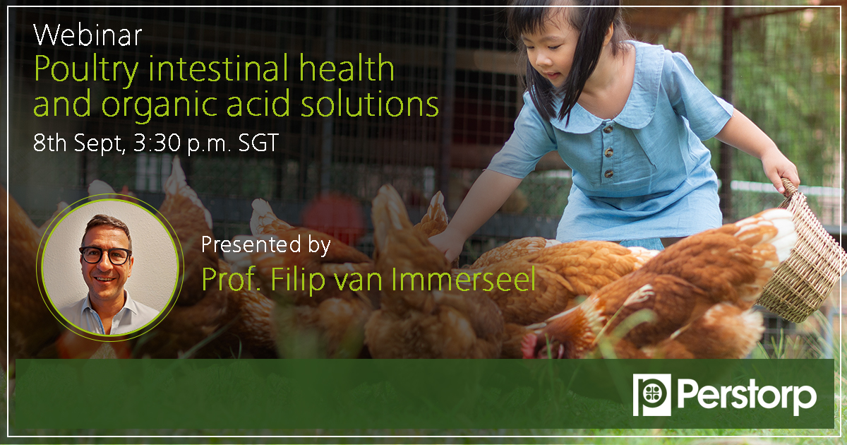 poultry intestinal health and organic acid solutions