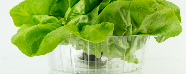 Green sallad in bioplastic packaging