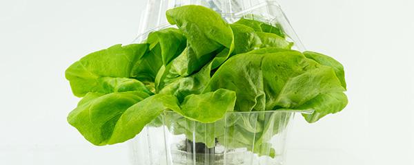 Green sallad in bioplastic packaging
