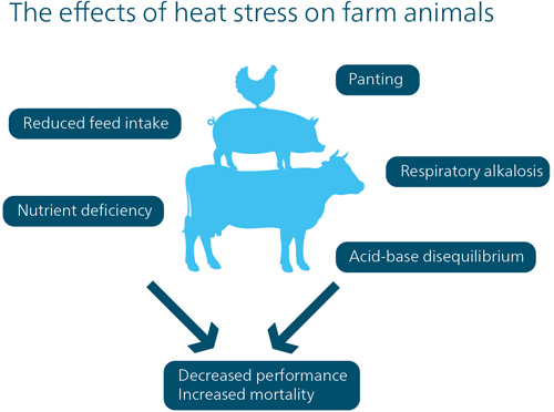 effects of heat stress on farm animals