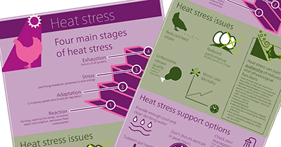 Heat Stress Infographic preview