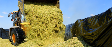 the impact of optimal silage quality