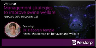 Management strategies to improve swine welfare