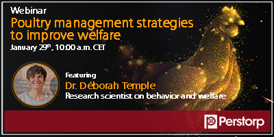 Production management strategies to improve poultry welfare - Webinar