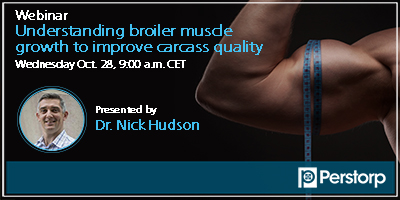 Understanding broiler muscle growth to improve carcass quality