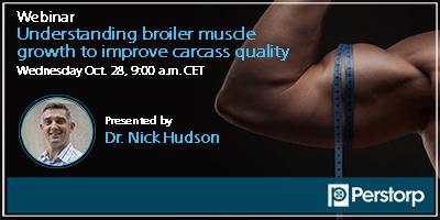 Zrozumienie przyrostu mięśni brojlerów w celu poprawy jakości tuszy