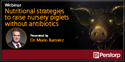 Webinar: Nutritional strategies to raise nursery piglets without antibiotics